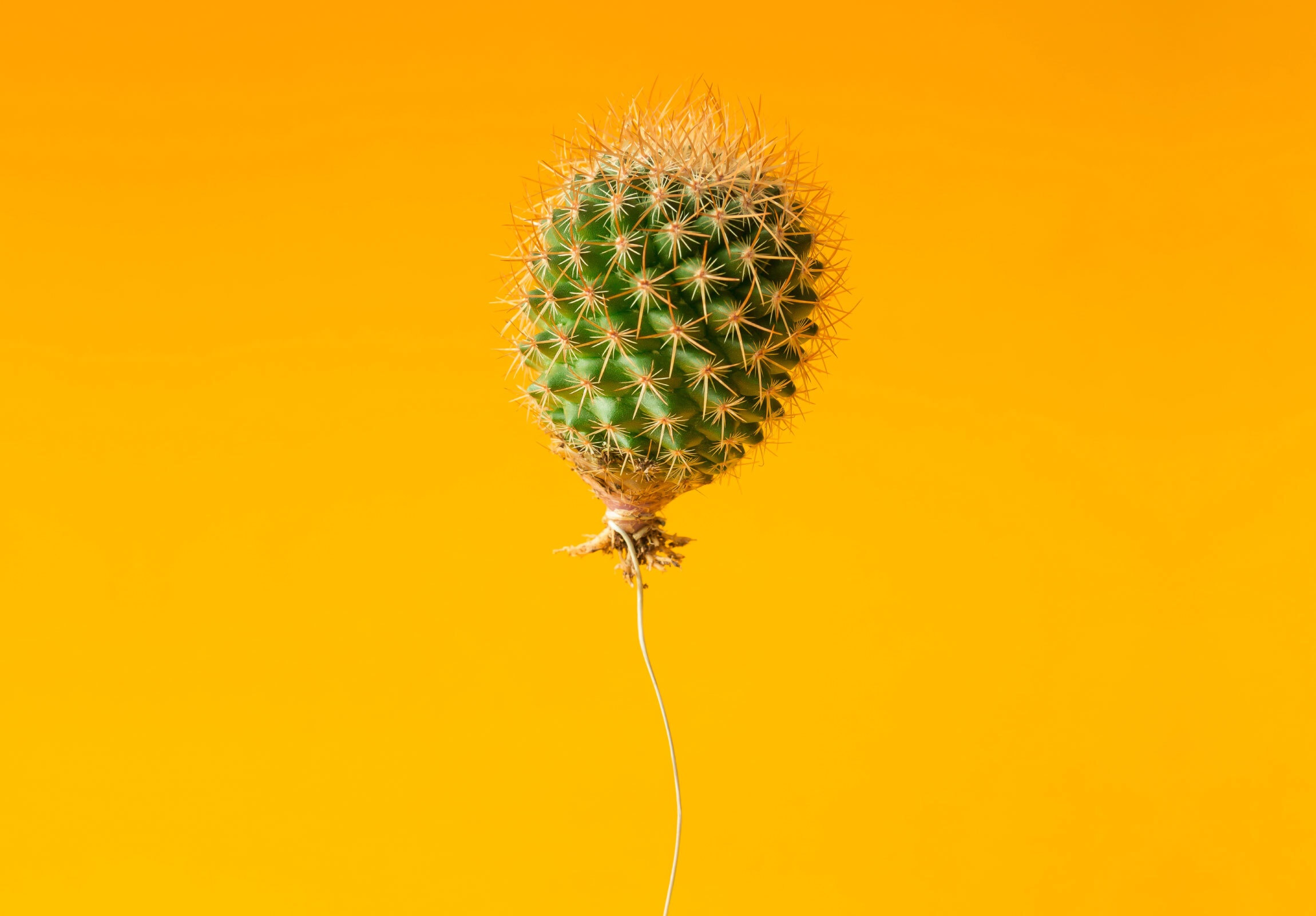Baloon cactus flying
